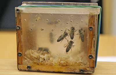 Контейнер с пчёлами