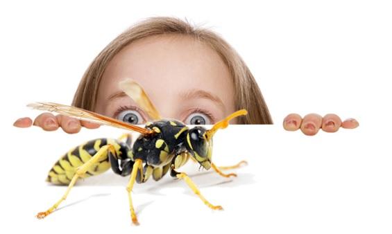 Аллергия на апитоксин