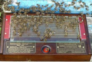 Аппарат для добычи пчелиного яда