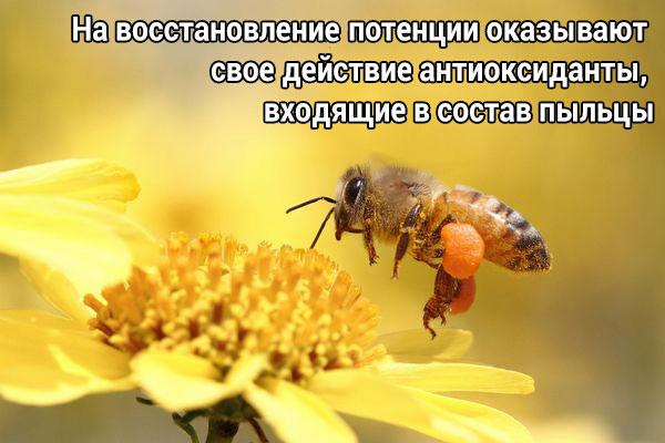 Лечение пчелами при импотенции