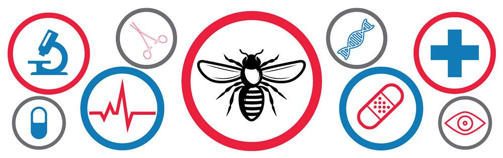 может ли быть пчелиный яд лекарством