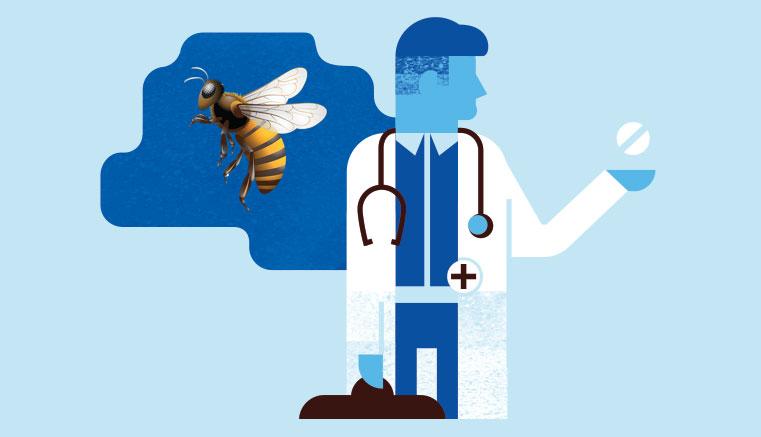 Отравление пчелиным ядом